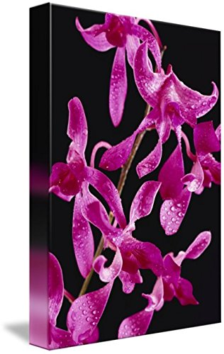 Imagekind Wall Art Print entitled Hawaii, Purple Dendrobium