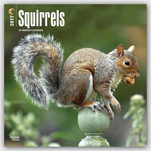 Download Squirrels - 2017 Calendar 12 x 12in pdf