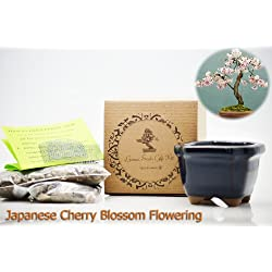 9GreenBox: Bonsai Seed Kit - Japanese Cherry Blossom