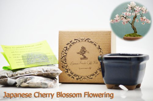 9GreenBox: Bonsai Seed Kit - Japanese Cherry (Japanese Bonsai)