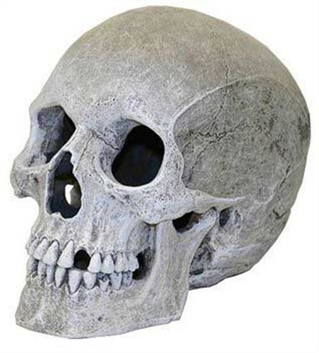 Exotic Environments Human Skull Aquarium Ornament, 5-Inch by 7-1/2-Inch by (Halloween Fish Tank)