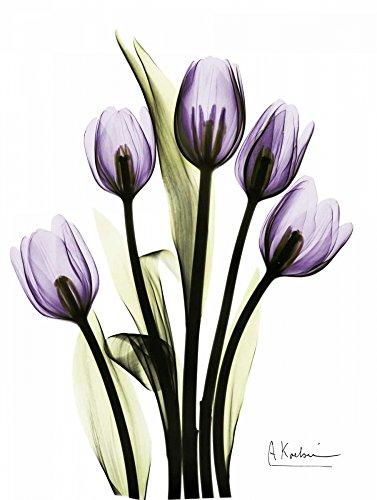 (HeritageArtDecor Regal Tulip B13 - Fine Art Print on Canvas Home Decor Print 24 x 32 Inch - Home Decor Wall Art Painting Canvas Print ONLY -NO Frame)