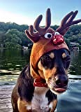 Pampered Whiskers Reindeer Costume for dogs - Rudolph the red nosed reindeer hat (21-26'' collar)
