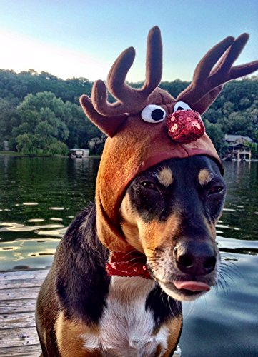 Pampered Whiskers Reindeer Costume for Dogs - Rudolph The red Nosed Reindeer hat (20-26