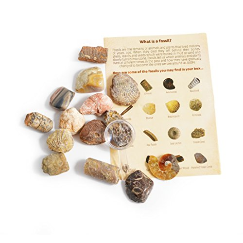 Fossil Collection Kit - Contains 15 Genuine Fossils! Pack of 1