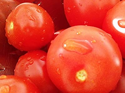 Beefsteak Tomato Seeds By Virgin Seed Supply