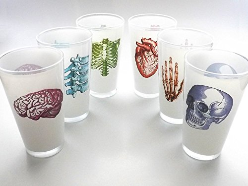 color Anatomy Beer Pint Glasses 16 oz. set of 6 anatomical heart nurse medical student doctor graduation gift by art altered elements