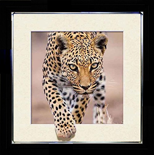 Lee's Collection Leopard 3D Holographic Animated Picture with Black Frame X 18 Inches, (3 D Pictures)
