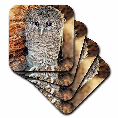 - 3dRose cst_9903_2 Tawny Owl, Strix Aluco One Month Young Owl Aragon Spain-Soft Coasters, Set of 8