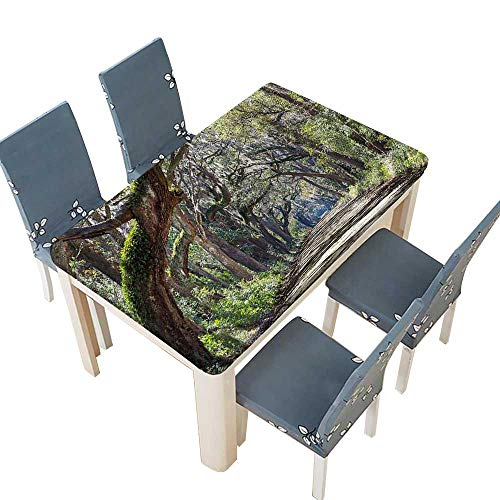 PINAFORE Indoor/Outdoor Spillproof Tablecloth in The Forest with Trees Botany South Carolina National Park Eco Picture Fern Wedding Restaurant Party Decoration W25.5 x L65 INCH (Elastic Edge)