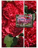 Celtic Red Hollyhock Seeds (Alcea Rosea) 40 Seeds UPC 600188190052 + Free Pack Mixed Carnations