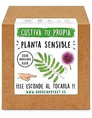 Garden Pocket - Kit cultivo PLANTA SENSIBLE