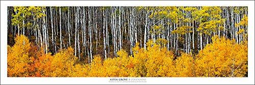 Panorama Landscape (Award Winning Landscape Panoramic Art Print Poster: Aspen Grove Colorado| New Release 2015)