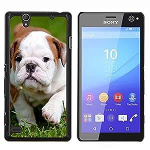 - Bulldog Bull Dog Pet Puppy - - Cubierta del caso de impacto con el patr??n Art Designs FOR Sony Xperia C4 Queen Pattern