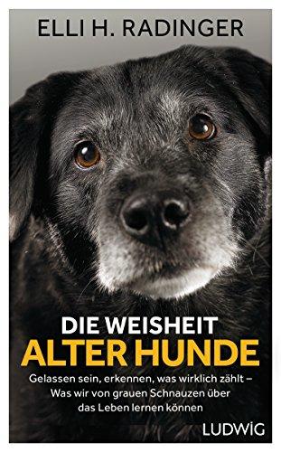 Die Weisheit alter Hunde: Gelassen sein, erkennen, was wirklich zählt – Was wir von grauen Schnauzen über das Leben lernen können (German Edition)