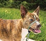 PetSafe Chic Gentle Leader Headcollar, No-Pull Dog