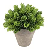 Kumii Small Artificial Plastic Potted Plant, Home Decor Grass for Desk ...