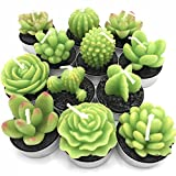 Succulent Cactus Candles Decor in Tealight holders 12 Unique Designs