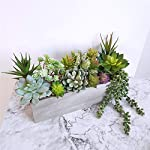 AuroraBotanical-14-pcs-ArtificialFauxFake-Succulent-Plants-Assorted-Variety-Pack-of-Unpotted-Realistic-Plastic-Cactus-Succulents-for-Home-Greenery-Decoration