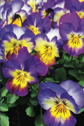 Purple Pansy Flower Journal (Flower Journals)