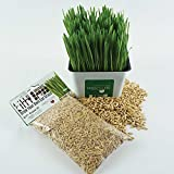 Priscillas Kitty Cat Pet Grass Seed Refill Pack (Barley, Oats, Wheat and Rye) 3 oz