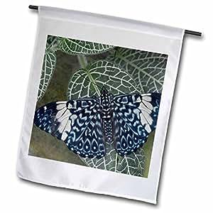 Danita Delimont–diseño de mariposas–Ecuador, Orellana, Napo River. Hamadryas Amphinome mariposa.–Banderas