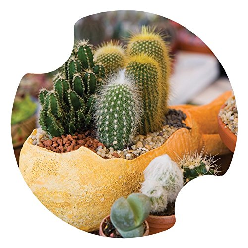 (Thirstystone Carster Cactus Flower Pots Coasters, Multicolor)