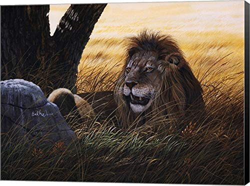 - Serengeti Lion by Don Balke Canvas Art Wall Picture, Museum Wrapped with Black Sides, 16 x 12 inches