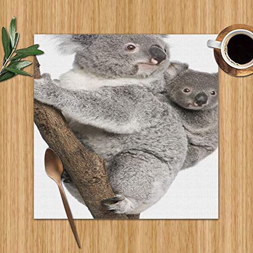 Koala Bears Climbing Tree 6 Years Wildlife Transportation Set Of 6 Placemats For Dining Table,Premium Reusable Place Mates,Plastic Placemats,Wipe Clean Placemats,Comic Place Mat,Dining Placemats(12 X (Australia Ideas Back Patio)