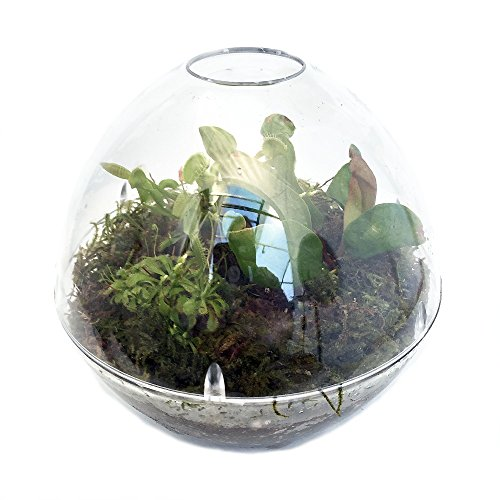 Carnivorous Terrarium with Live Plants