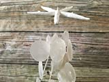 Starfish and Capiz Seashell Beach Wind Chime