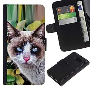 All Phone Most Case / Oferta Especial Cáscara Funda de cuero Monedero Cubierta de proteccion Caso / Wallet Case for Sony Xperia Z3 Compact // Thai Snowshoe Breed Cat House Clever