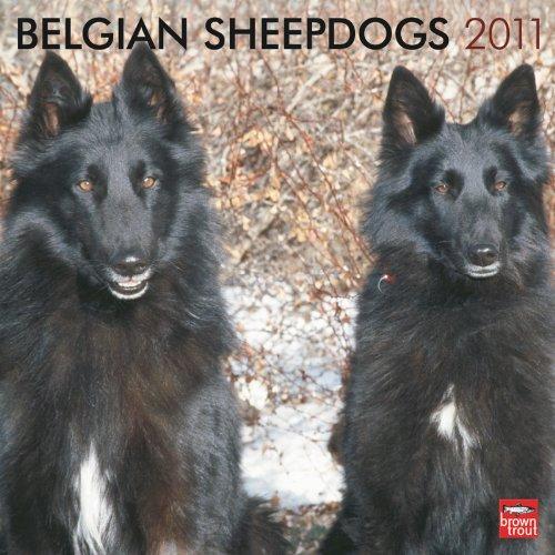 Sheepdog 2011 Calendar - Belgian Sheepdogs 2011 Calendar