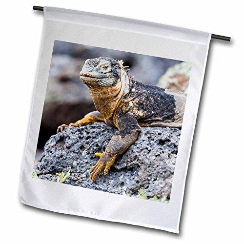 3dRose Danita Delimont - Reptiles - Ecuador, Galapagos Islands, Plaza Sur, Male land iguana basking. - 18 x 27 inch Garden Flag - Las Americas Plaza Images