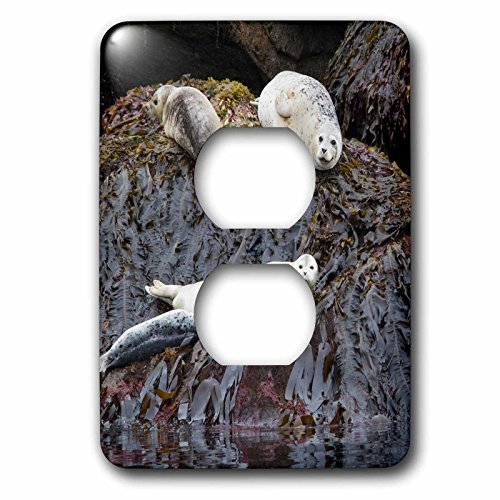 3dRose Danita Delimont - Seals - Harbor Seals Resting at low tide - Light Switch Covers - 2 plug outlet cover - National At Outlets Harbor
