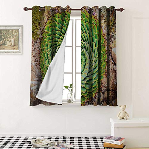 shenglv Plant Blackout Draperies for Bedroom National Flower of Lesotho South of Africa Aloe Polyphylla Spinning Spiral Aloe Vera Curtains Kitchen Valance W72 x L63 Inch Multicolor