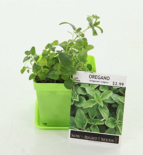 Indoor Herb Garden Starter Kit - Full Size Seed Packets of Basil, Chives, Cilantro, Oregano & Parsley - Everything You Need to Grow Herbs in Your Kitchen - Soil, Reusable Pots, Trays, Plant Markers, by Right Hardware (Image #4)