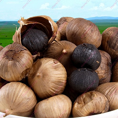 ChinaMarket 100pcs Black Garlic Seeds pure natural and organic Vegetable Seeds