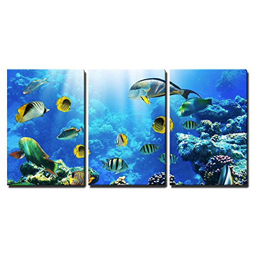 "wall26 - 3 Piece Canvas Wall Art - Photo of a Tropical Fish on a Coral Reef - Modern Home Decor Stretched and Framed Ready to Hang - 16""x24""x3 Panels"