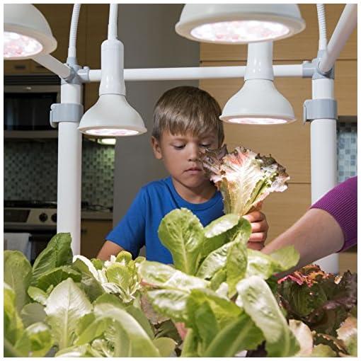 51WkrH2B5FL. SS510  - OPCOM® Farm GrowBox (High Capacity, Hydroponics, indoor garden & farm, greenhouse,Growing herb, vegetable, flower, fruit)