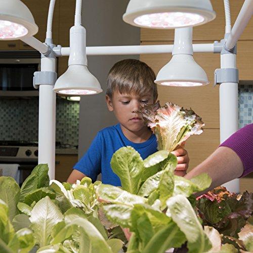 51WkrH2B5FL - OPCOM® Farm GrowBox (High Capacity, Hydroponics, indoor garden & farm, greenhouse,Growing herb, vegetable, flower, fruit)