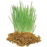 The Dirty Gardener Cat Grass – 1,000 Seeds