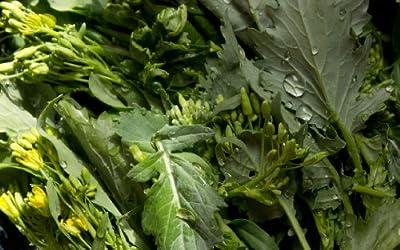 "500+ Broccoli Raab (Rabe, Rapini) Seeds- ""Del Trasimeno"""
