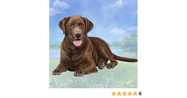 Collection Boetzel 2er Set Coaster Dog Motive Labrador New 23517
