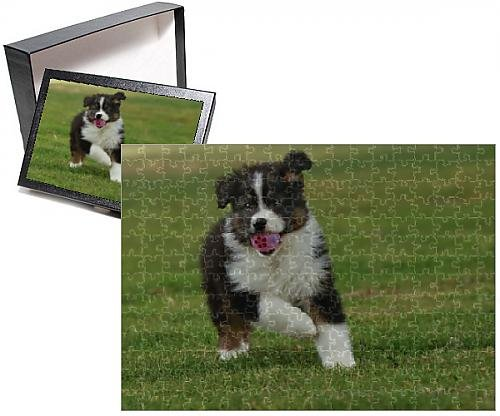 Photo Jigsaw Puzzle of Australian Sheepdog / Shepherd Dog - with ball in mouth