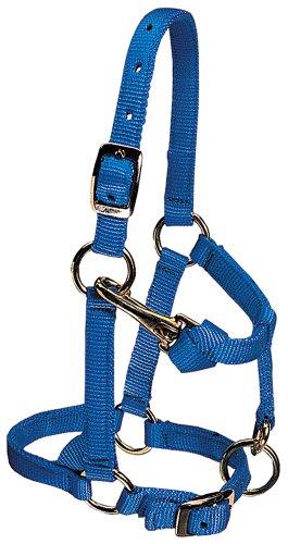Weaver Leather Nylon Miniature Horse Adjustable Halter, Large, Blue ()