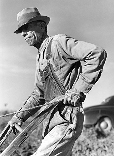 Posterazzi Sharecropper Na Tenant Farmer Plows Sweet Potatoes Greene County Georgia. Photograph 1941 by Jack Delano. by Poster Print by by, (24 x 36)