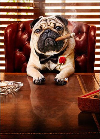Mobster Dog Funny Pug Father's Day Card (Mob Boss Tie)