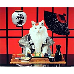 Sushi Cat (Japanese) Cute Kitten Art Print Poster (16x20)