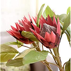 Werrox -1Pc King Protea Artificial Flower Fake Plant - Wine Red | Model WDDNG -3452 65